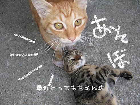 甘えん坊.jpg