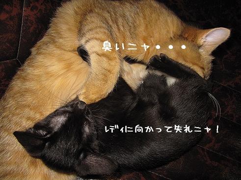 変な寝方.jpg