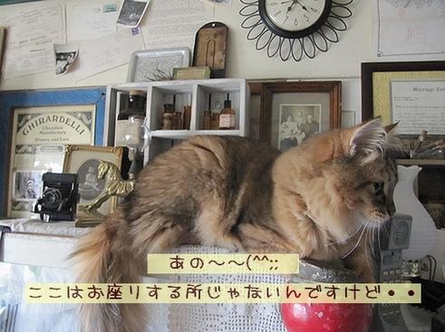 やっぱ猫.jpg