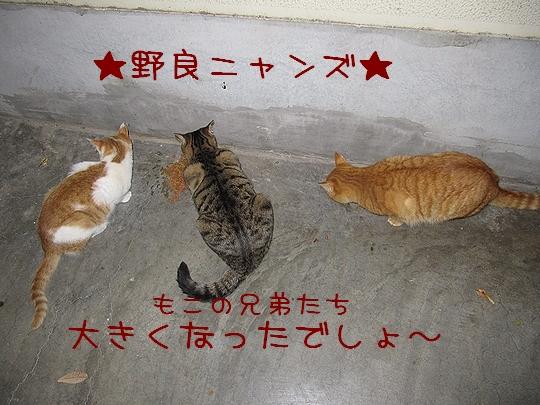 野良ニャンズ.jpg