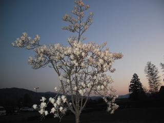 何の花(シャープ)