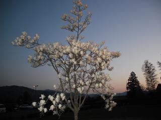 何の花(オリジナル)
