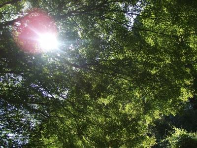 新緑の木漏れ日_R
