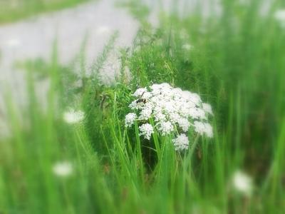 花と蜂-2_R