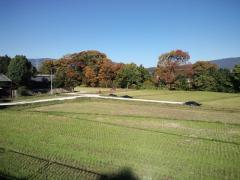 初冬の田んぼ-1_R