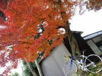 自転車と紅葉-3_R