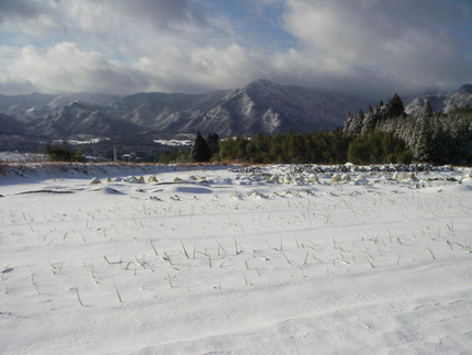 101231雪