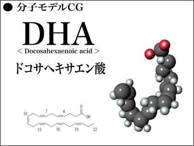 DHAモデル