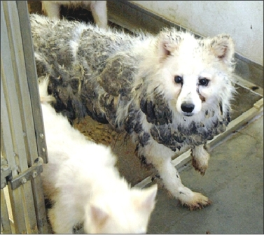 dog_20120122125840.jpg