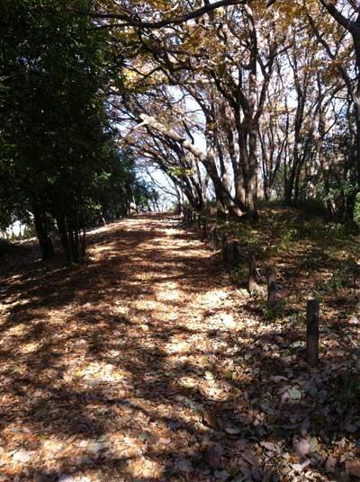 多摩よこやまの道その1
