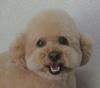 taro_20110802215444.jpg