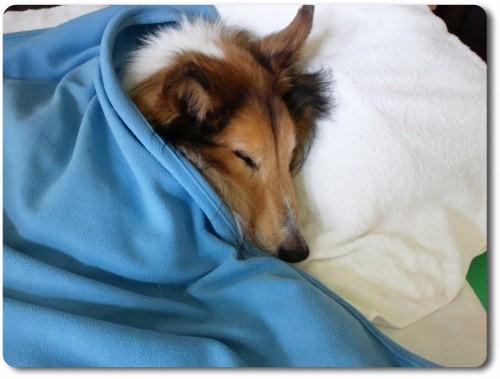 イビキかいて眠るシン