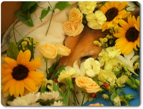 お別れ・花にかこまれて・おやつも持っていく