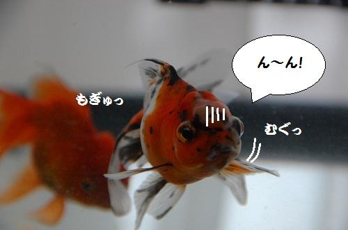 esta yeno~ 4