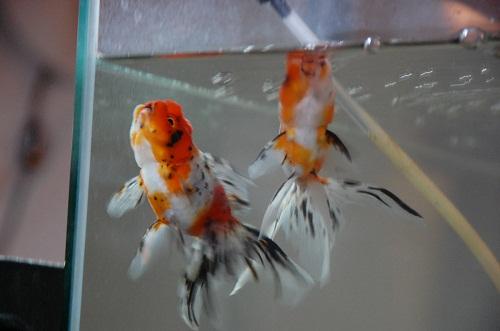 suzuki hermanos 3