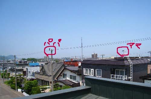 屋根ツガイ613