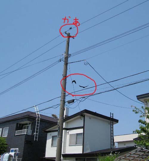 親子電線飛翔
