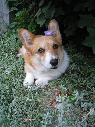 頭に紫陽花