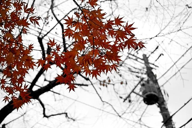091213_001_曇り空