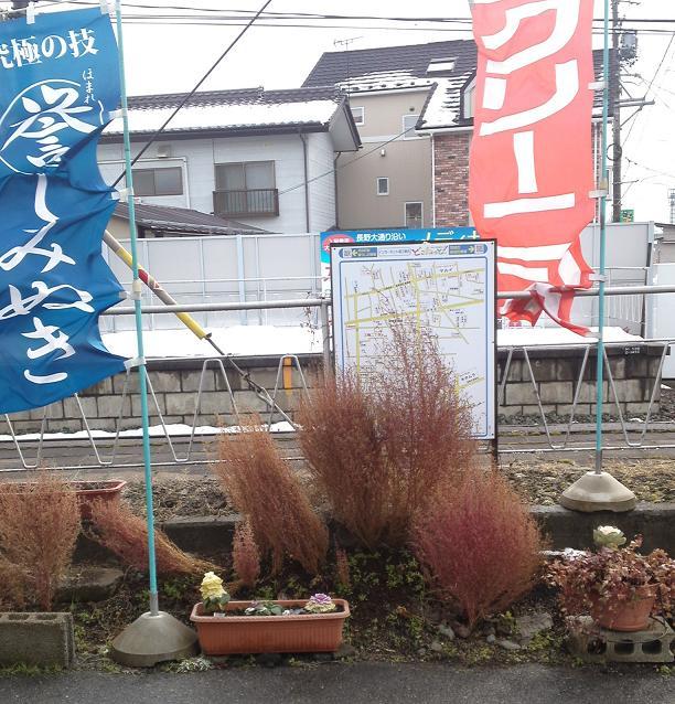 店前花壇H241月 (2)