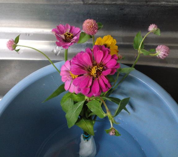 秋の花と夏の花