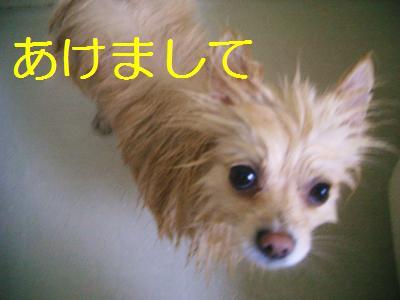 201001038303.jpg