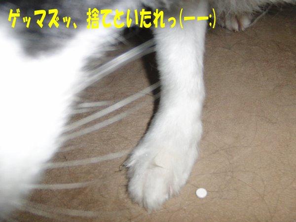 20100703-03