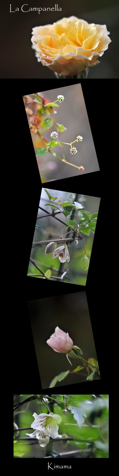 11月9日庭の花