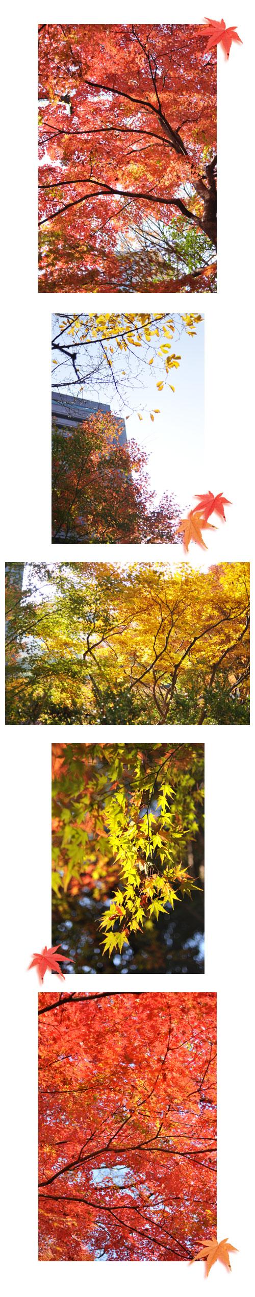 12月3日小石川後楽園1