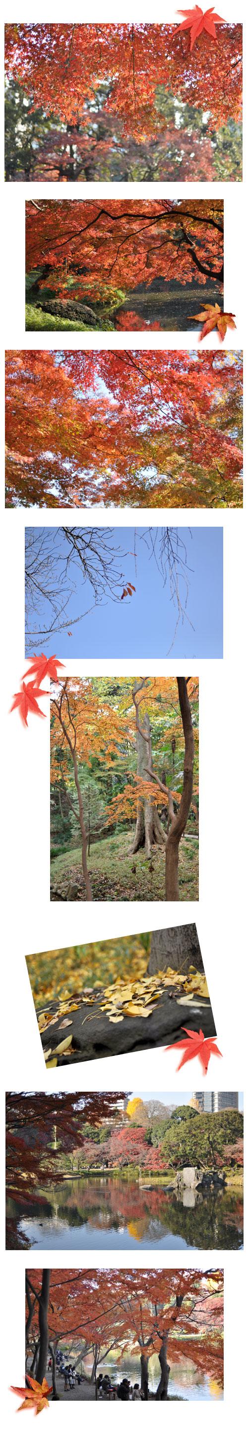 12月3日小石川後楽園2