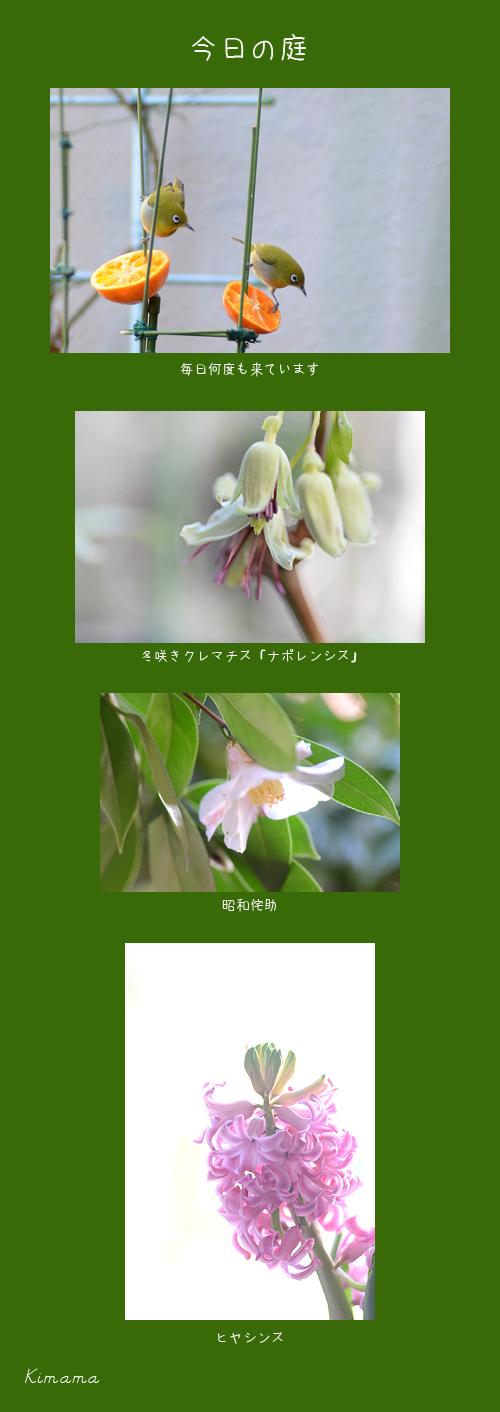 2月17日庭の花