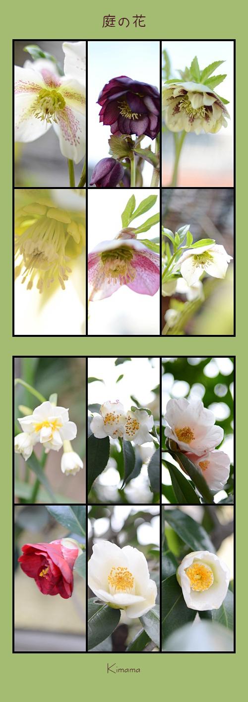 3月3日庭の花