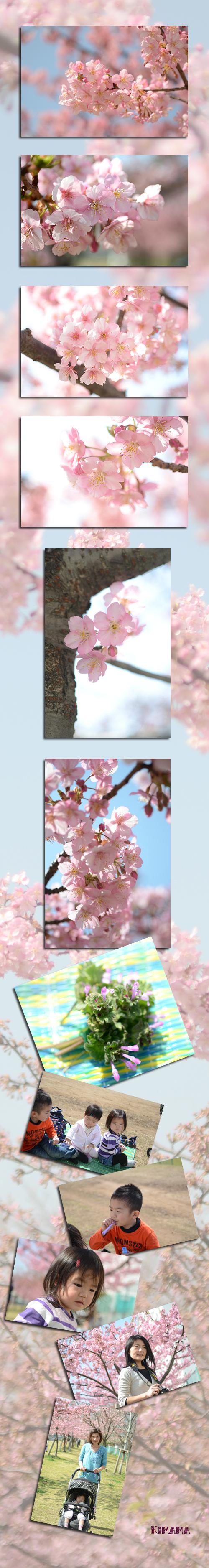 3月10日河津桜2
