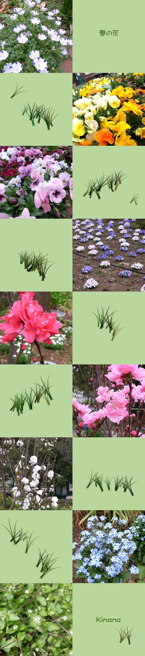 3月20日春の花
