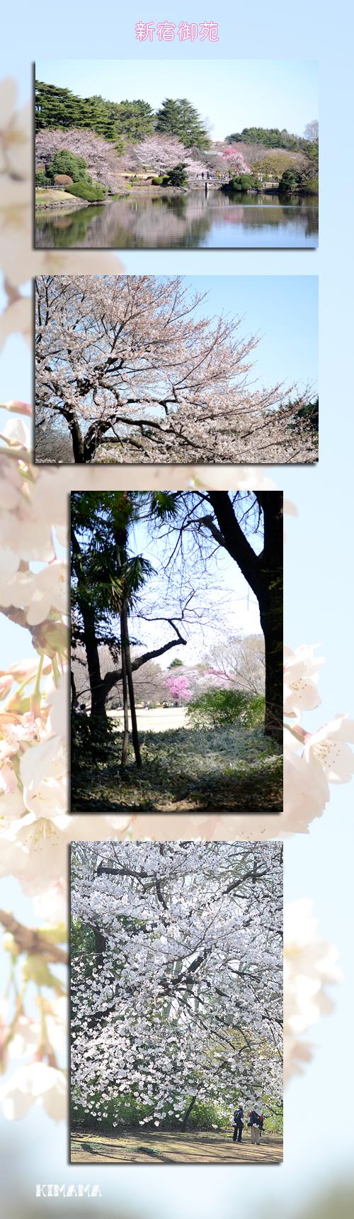 3月21日御苑1