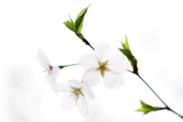 桜130224f_convert_20130324202650