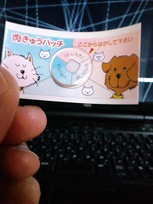 CA3G0400_20100618233002.jpg