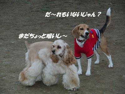 CIMG1150_sh01.jpg