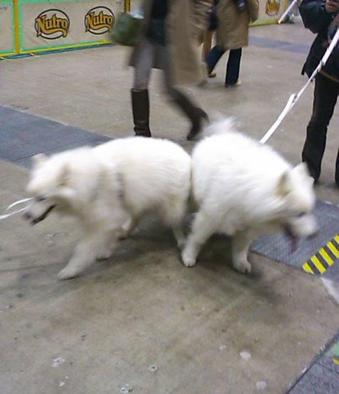 040101白犬2頭