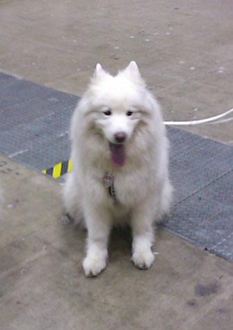 040102白犬1頭