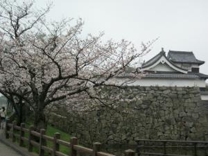 桜(2013.3.19)
