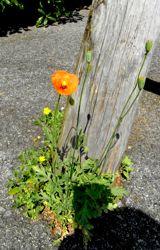 p-flower.jpg