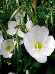 p-flower2.jpg