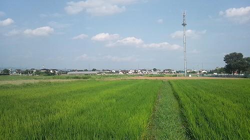 群馬 田舎 田圃道 風景写真