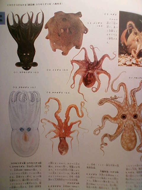 octopus_cape_f.jpg