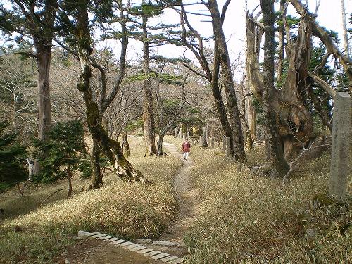 20100504 13 山道④(L)