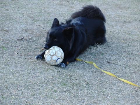 ボール強奪