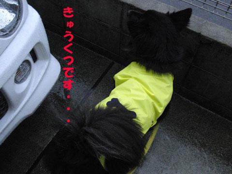 CIMG2187きゅうくつ