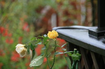 2009-10-26_00.jpg