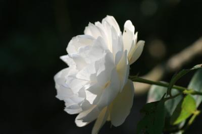 2009-11-07_14.jpg